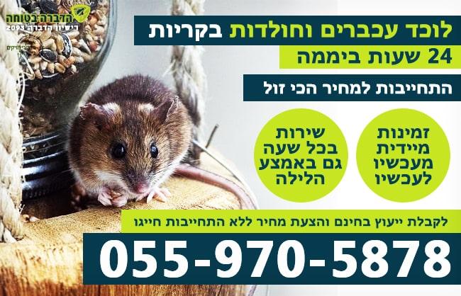 לוכד עכברים בקריות