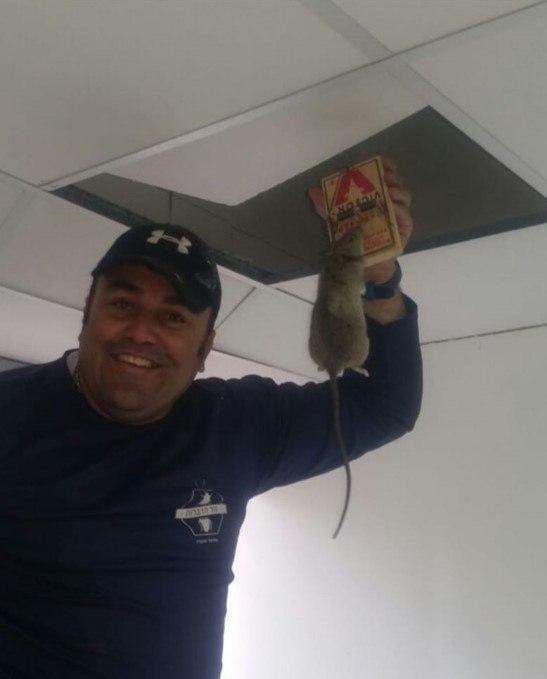 לכידת עכבר בתקרה אקוסטית