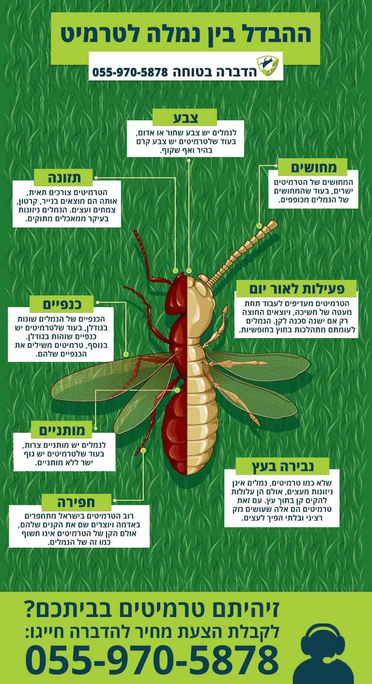 הבדל בין טרמיטים לנמלים