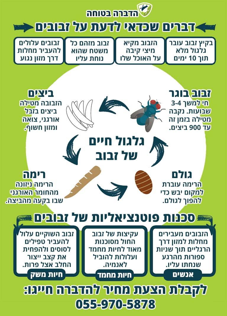 מידע על זבובים וסכנות