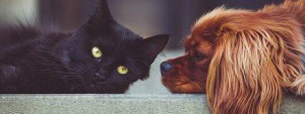 הדברה בבית עם בעלי חיים